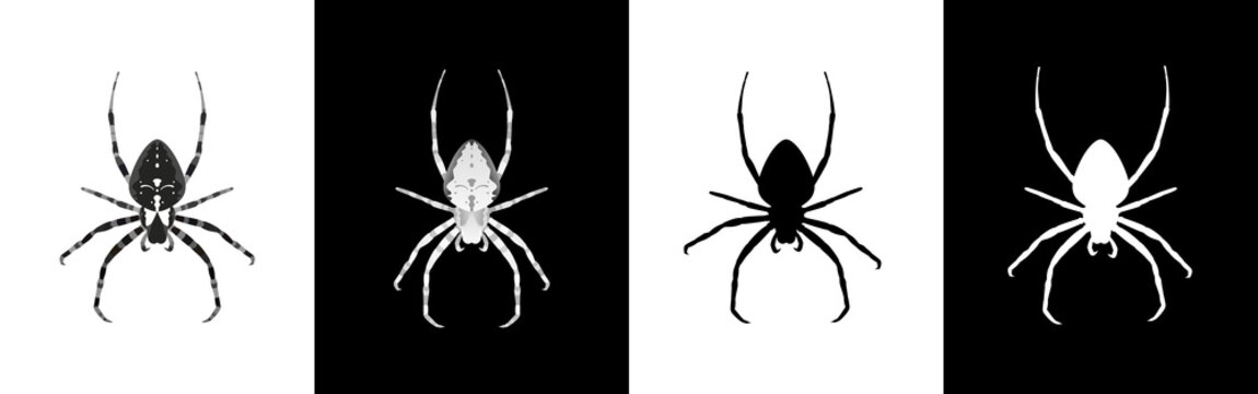 Set of spider insect vector illustration