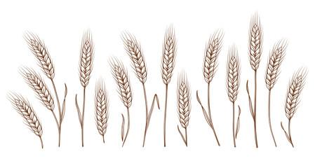 set of hand drawn wheat ears