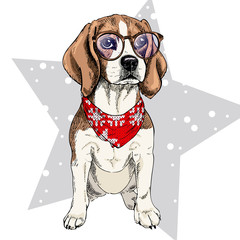 Vector portrait of beagle dog wearing winter bandana and glasses. Isolated on star and snow. Skecthed color illustraion. Christmas, Xmas, New year. Party decoration, promotion, greeting card