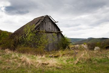 Dilapidated barn overgrown by shrubs and trees