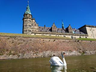 Swan at Kronborg - Elsinor castle, Denmark