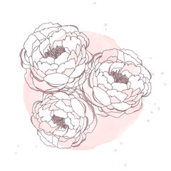 Hand drawn peonies isolated on white background with watercolor blot. Greeting card with peonies, can be used as invitation card for wedding, birthday and other holiday and summer background.