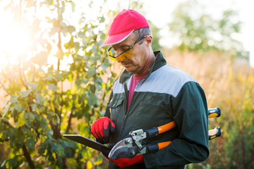 Modern farmer in the field with big scissors looking at a tablet.