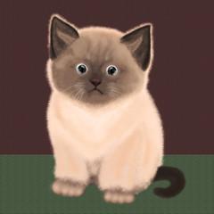 Pretty fluffy Siamese kitten on a textured background