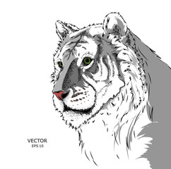 Portrait of a tiger. Can be used for printing on T-shirts, flyers and stuff. Vector illustration