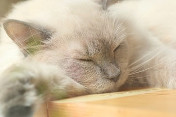 cat sleeping in nature