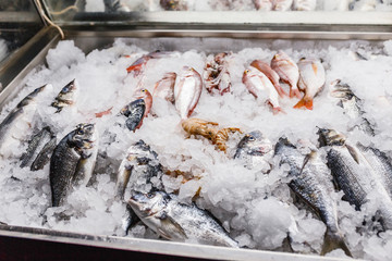 Freshly caught sea fish and shrimp for sale on a counter with ice