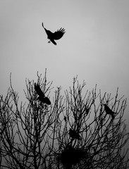 crow landing in a tree with perched birds nesting in woodland