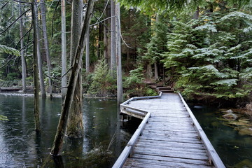 Bridge over the small creek in   Belcarra Park. Winter time the stream is covered with ice. Coniferous forest, several trees stand in the water.
