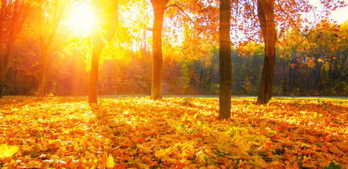 Photo Stands Melon autumn trees with the sun rays