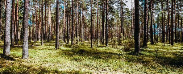 Beautiful wild forest