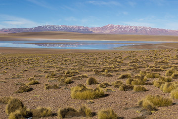 Fototapete - Desert and mountain over blue sky and white clouds on Altiplano,Bolivia