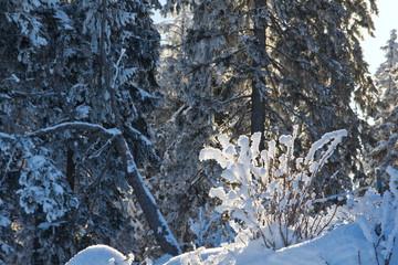 Winterwunderland Weihnachten