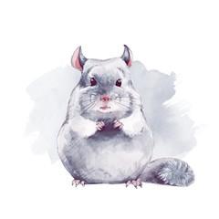 Chinchilla. Cute watercolor illustration
