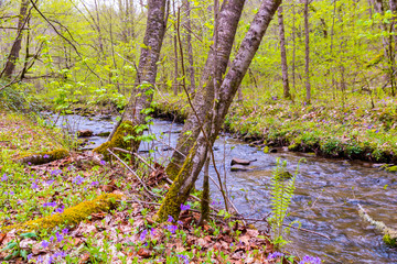 Small forest creek.