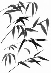Watercolor painting of bamboo leaves. Black ink on white paper study.