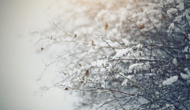 Snow-covered bushes in the winter in cloudy weather.