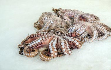 Fresh Octopus at the Limassol fish market.