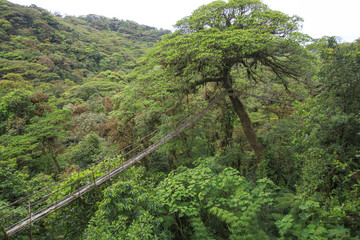 Old wooden suspension bridge hanging in trees of rainforest, Costa Rica