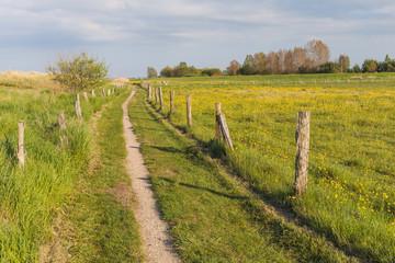 Wanderweg entlang Frühlingswiese mit Hahnenfuß bei Behrensdorf an der Ostsee in Schleswig-Holstein
