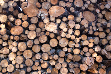 Stack of Cut Firewood