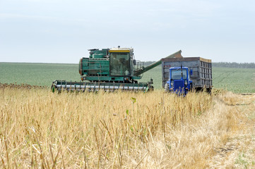 Combine harvester load sunflower seed in the truck at the time of harvest in autumn