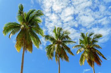 three palms on sky background