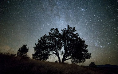 Lone Western Juniper Tree and Milky Way at night sky with stars