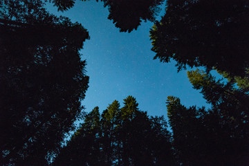 Sky over a moonlit clearing in a forest with night sky with stars