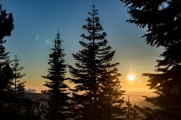 Sunrise in the Mt. Hood National forest and tree silhouette