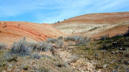 Bright midday painted hills Spring Sutton Mountain John Day Great Basin High Desert Columbia Plateau