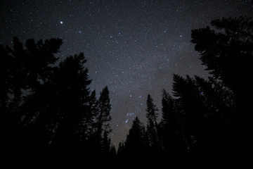 Dark sky forest and stars on Mt. Hood 5