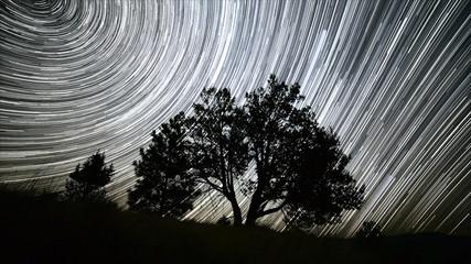 Lone Western Juniper Tree Night Sky Star Trails Over Oregon