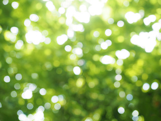 Green blurred background with bokeh from sunlight shining through leaves