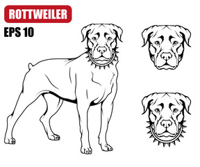 Rottweiler icon.Dog collection