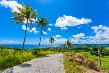 Wall Murals Caribbean View from Cherry Tree Hill to tropical coast of caribbean island Barbados