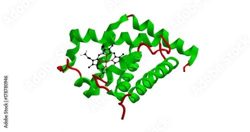 molecular structure of myoglobin, 3d rendering