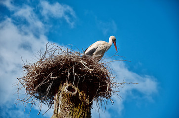 The stork sits in a nest on a high pillar.