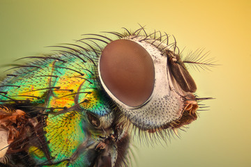 Extreme magnification - House fly