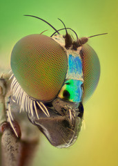 Fotobehang Macrofotografie Extreme magnification - Long legged fly
