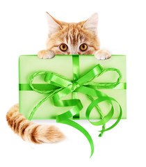 ginger cat and gift package with green ribbon bow, isolated on white background