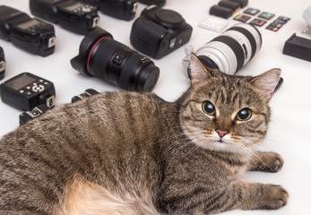 cat and photo equipment