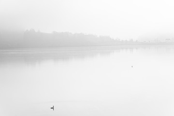 Lonely duck over calm lake in fog,fine art B&W