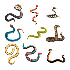 Colorful collection of various snakes