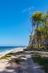 Küstenwald an der Ostseeküste bei Nienhagen