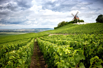 Garden Poster Vineyard Champagne. Vineyard and windmill Champagne Region near Vernezay France