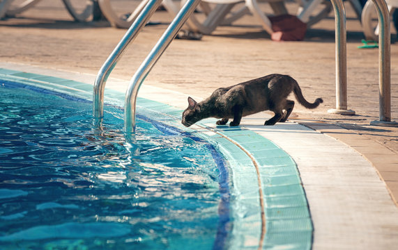 the cat drinks water from the pool