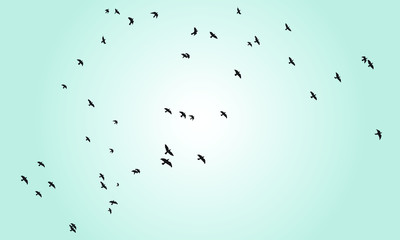 Birds silhouette with blue sky background.