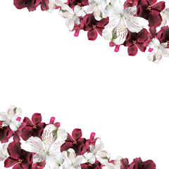 Wall Mural - Beautiful floral background of pelargonium and alstroemeria
