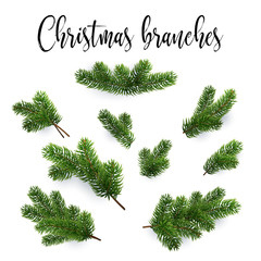 Set of fir branches. Christmas tree, pine, conifer. Realistic detailed vector illustrations. Symbol of Christmas and New Year isolated on white background for your design. EPS10